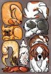 """Postkarte """"Dogs"""" - Ines Korth"""
